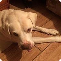 Adopt A Pet :: Dano - Kittery, ME