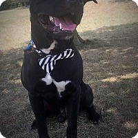 Adopt A Pet :: Zeke - Flint, MI