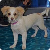 Adopt A Pet :: Indie - Lodi, CA