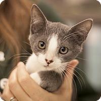 Adopt A Pet :: Ramon - Dallas, TX