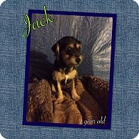 Adopt A Pet :: Jack - LAKEWOOD, CA