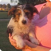 Adopt A Pet :: Raymond - Rochester, NY