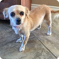 Adopt A Pet :: Sweetpea - Orange, CA