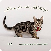 Adopt A Pet :: Lilo - Chino Hills - Chino Hills, CA
