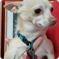 Adopt A Pet :: Jed - Centerville, GA