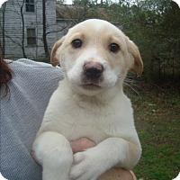 Adopt A Pet :: Lucky - Old Bridge, NJ