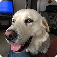 Adopt A Pet :: Stryker - Adoption Pending! - Ascutney, VT