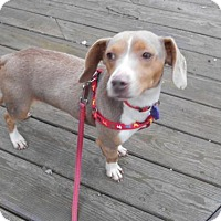 Adopt A Pet :: Louie - Akron, OH
