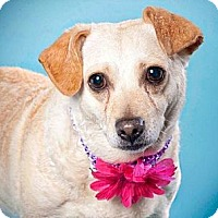 Adopt A Pet :: Mandy - Sacramento, CA