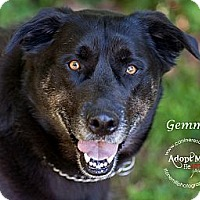 Adopt A Pet :: Gemma - Westfield, NY