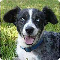 Adopt A Pet :: Frankie - Mocksville, NC