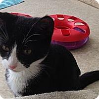 Adopt A Pet :: Katrina - Island Park, NY