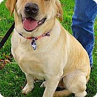 Adopt A Pet :: Lance family dog - Sacramento, CA