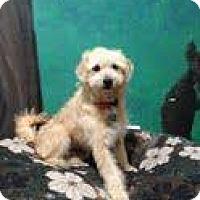 Adopt A Pet :: Darryl - Goleta, CA