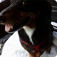 Adopt A Pet :: Lottie - Humble, TX