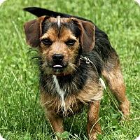 Adopt A Pet :: Bradford - Staunton, VA