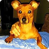 Adopt A Pet :: Reba - Topeka, KS