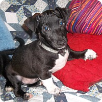 Adopt A Pet :: Tux - Virginia Beach, VA