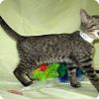 Adopt A Pet :: Nico - Powell, OH