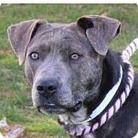 Adopt A Pet :: MELODY-Low Fees/Spayed - Red Bluff, CA