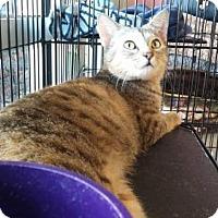 Adopt A Pet :: Minerva - Woodstock, GA