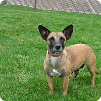 Adopt A Pet :: Mae - New Oxford, PA