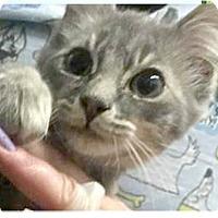 Adopt A Pet :: Core - Springdale, AR
