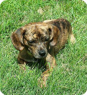 JUNEAU | Adopted Dog |...