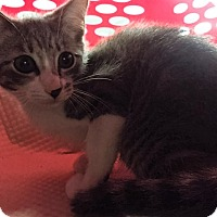 Adopt A Pet :: Faith - Forest Hills, NY