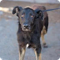 German Shepherd Dog Mix Dog for adoption in Fresno CA, California - Xavier