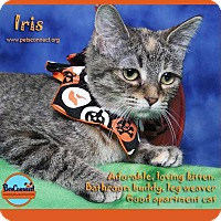 Adopt A Pet :: Iris - South Bend, IN
