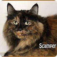 Adopt A Pet :: Scamper - Idaho Falls, ID
