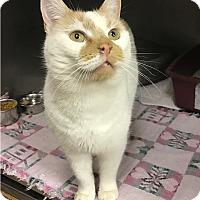 Adopt A Pet :: (Maka) Mele KalIkimaka - Albion, NY