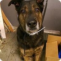 Adopt A Pet :: Cody - Ogden, UT