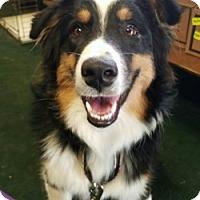 Adopt A Pet :: INDIGO - Gustine, CA