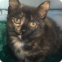 Adopt A Pet :: Chili - Tampa, FL