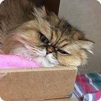 Adopt A Pet :: GALLIVAN - Waterford, VA