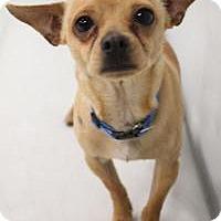 Adopt A Pet :: Gumby - Yukon, OK