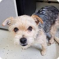 Adopt A Pet :: Toto - Champaign, IL