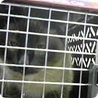 Adopt A Pet :: DILLON - Louisville, KY
