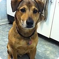 Adopt A Pet :: Rex - Raritan, NJ