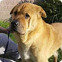 Adopt A Pet :: Rosie - Newbury Park, CA