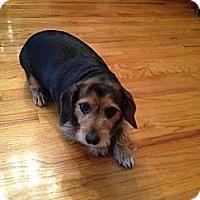 Adopt A Pet :: Peanut - Richmond, VA