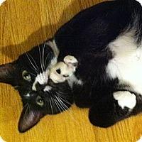 Adopt A Pet :: Inny - Irvine, CA
