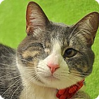 Adopt A Pet :: Lenny - Foothill Ranch, CA