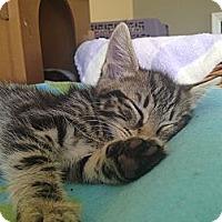 Adopt A Pet :: Hillary - Island Park, NY