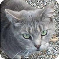 Adopt A Pet :: Jackie- Pending - Warren, OH