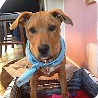 Adopt A Pet :: Heidi - East Rockaway, NY
