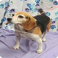 Adopt A Pet :: Roxy Hughes - Waldorf, MD