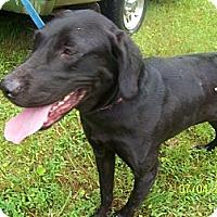 Adopt A Pet :: Missy - Paintsville, KY